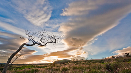 sky tree grass silhouette clouds sunrise hawaii bigisland puu img2200