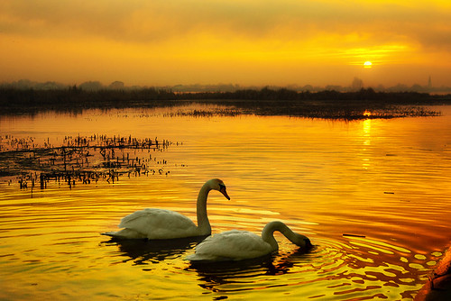 sun mist lake clouds sunrise canon reflections reeds swans serenity warmlight calmness