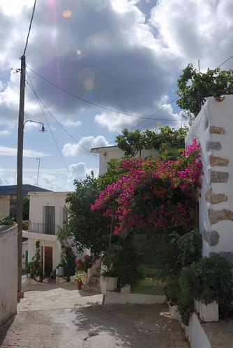 Pefki - Ortsansicht mit Blumen