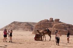 Unsere Kamele als Foromotiv