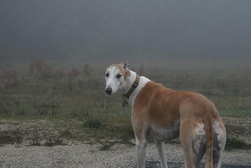 Greyhound Run 2011.01.01 | by r3v || cls