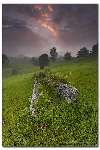 trees mist green grass fog clouds sunrise canon landscape soft australia wideangle deadtree nsw aussie aus 1020mm soren manfrotto murwillumbah sigmalens eos450d martensen 450d tweedshire tweedarea hitechgradfilters 09ndreversegrad