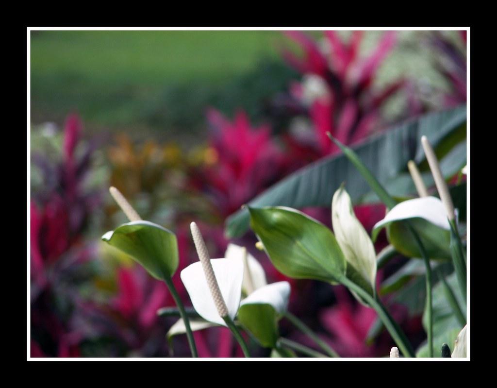 Kebun Raya Botanical Gardens