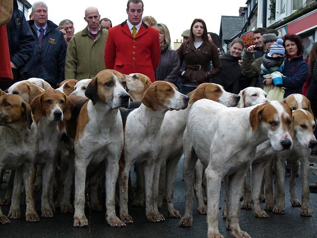Hound-dog Day