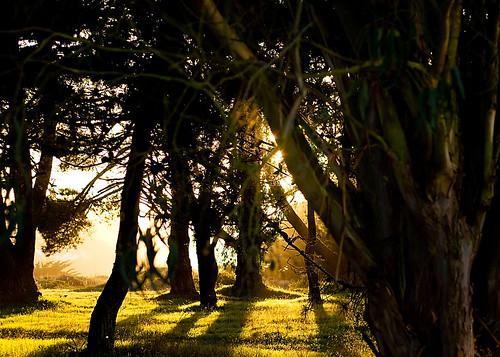 sanfrancisco california trees sunset lake 50mm nikon d200 lakemerced jaypasion