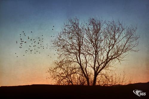 winter sunset tree texture colors birds canon flying deadtree 7d 70200mm flickraward flickraward5