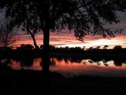 trees usa lake water night landscape backyard florida sunsets leecounty southwestflorida condoview esterofl pelicansoundcountryclub robertbobbypowell