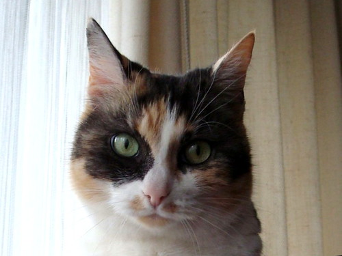 Missy closeup