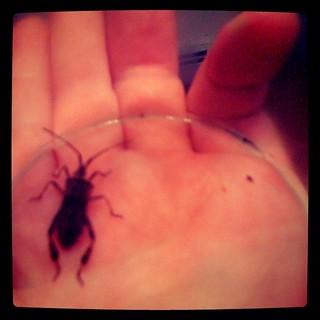 house bugs | by Erik Mallinson