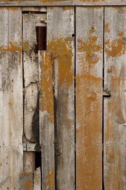 Barn swallow door