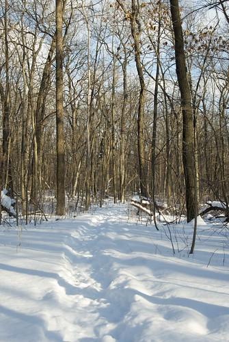 Winter Trail | by Tweygant