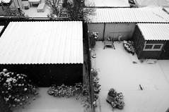 snow b/w