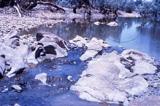 1959 Ord River near Button's Crossing