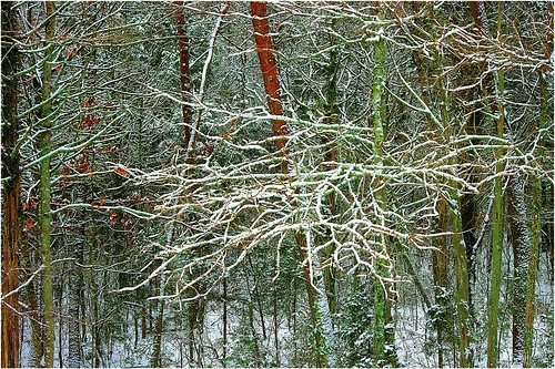 trees snow easttn