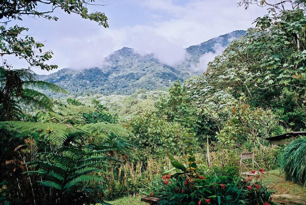 35mm_scan_13 | Los Cedros Preserve, Ecuador - reservaloscedr… | Flickr