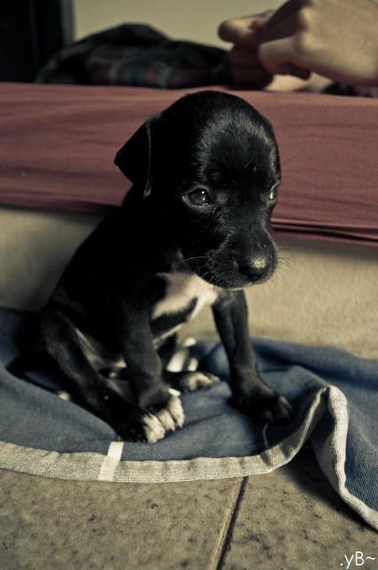 Kira, vintage lomo dog.