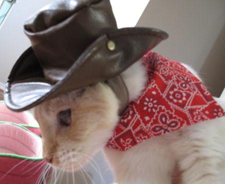Ashy Cowboy 2