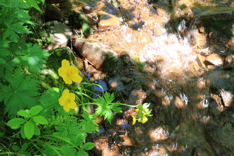2014-07-22_02847_北海道登山旅行.jpg