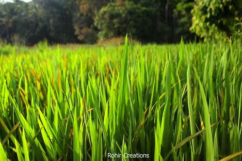 Priol Photo Walk in Fields | by Rohir Creations