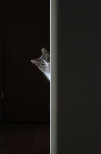 Who's there? | by Axeman72