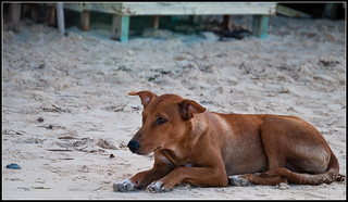 On a solitary beach