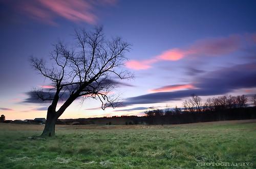 longexposure pink blue sunset sky tree clouds landscape nikon purple farm maryland explore hitech ndfilter d7000