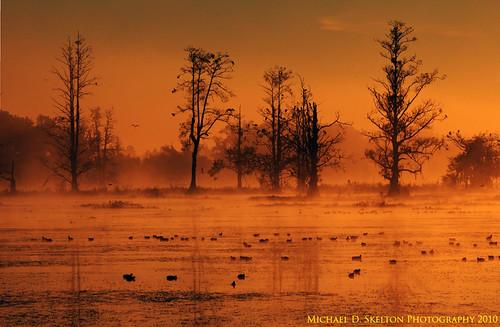 sunrise florida lakeland polkcounty circleb circlebreserve michaelskelton michaeldskelton michaeldskeltonphotography