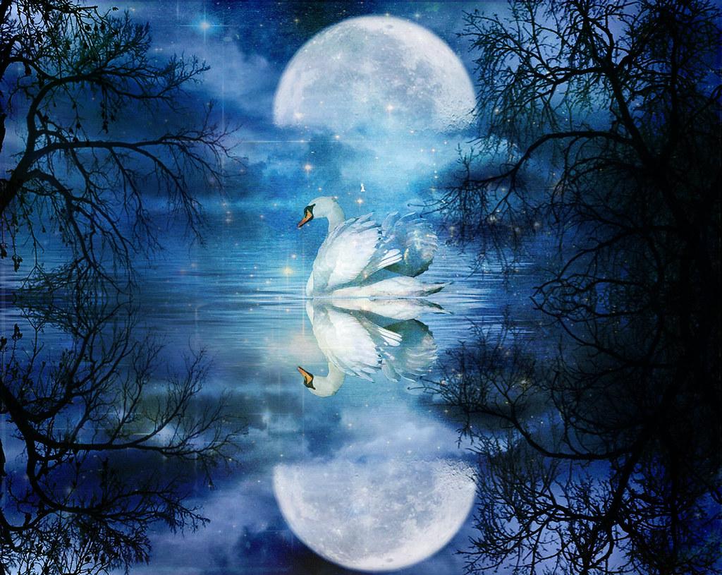 Swans By Moonlight >> Cigno Al Chiarore Della Luna Swan In The Moonlight Flickr