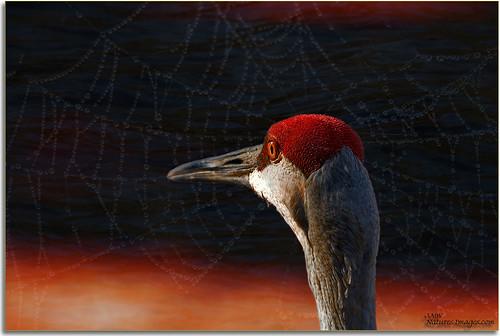 birds closeup parks 100400mm sandhillcranes blending stateparks multiimage floridaimages lakekissimmee floridastateparks