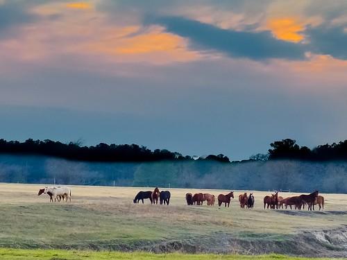 ranch sunset sky horses sol atardecer texas huntsville