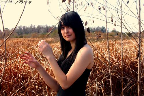 fall field florida poinciana anjie
