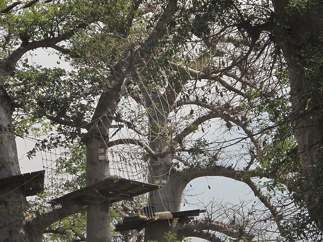 Accrobaobab, Le Senegal, Saly, West Africa, Westafrika, Afrika