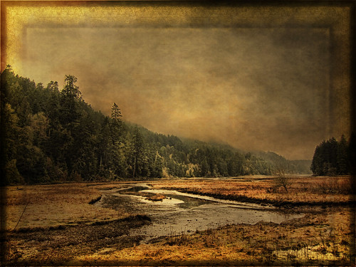 winter sunset sea sky texture beach golden bay bc goldstream vancouverisland victoriabc zedzap