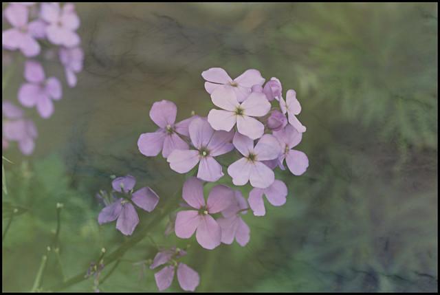 Purple in the Mist
