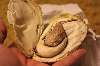 Inside Mango Seed | by joeysplanting