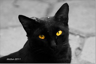 The Black CAT (Commando) | by McGun