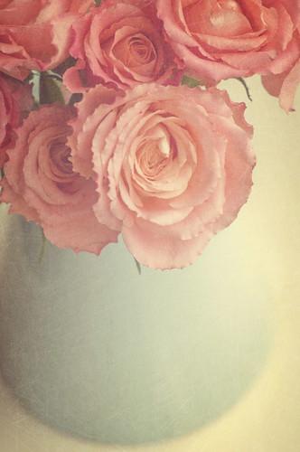 roses stilllife florabellatextures florabellaactions