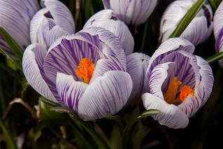 Spring has sprung   by Piero Sierra