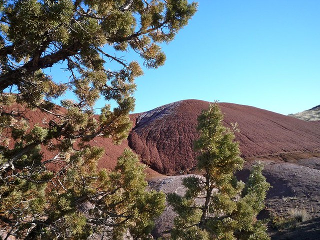 Evergreens and Painted Hills