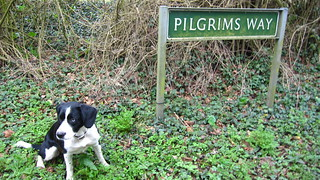 Holly Pilgrim 2 | by William Parsons Pilgrim