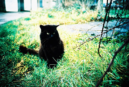 Oscar the alley cat | by Daz.