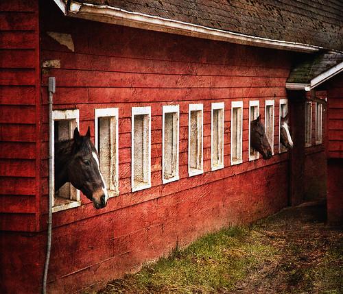 ranch horses horse texture barn farm textures galope distressedjewell