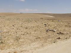 תמונות משדה בריר