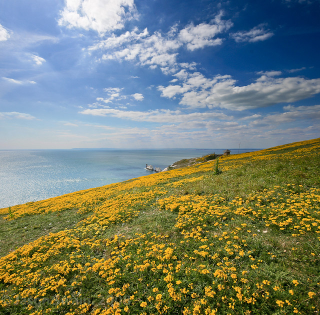 Springtime on the Isle of Wight. The not quite scraping the bottom of the barrel yet coastal archive event. upload #76