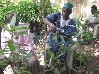 Naaba Apiniyela learns forestry skills