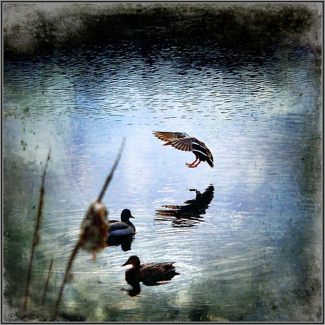 duck season . . .
