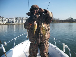 Photo of man holding up a pair of yellow perch.