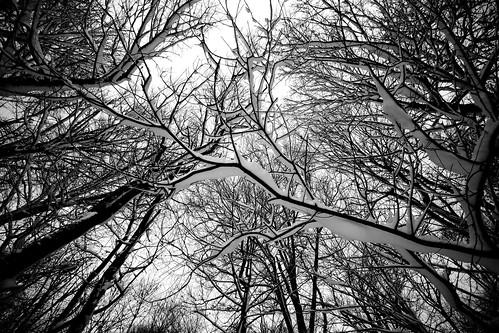 trees winter bw snow tree cool backyard outdoor uncool cool2 cool5 cool3 cool6 cool4 explored cool7 uncool2 uncool3 uncool4 uncool5 iceboxcool