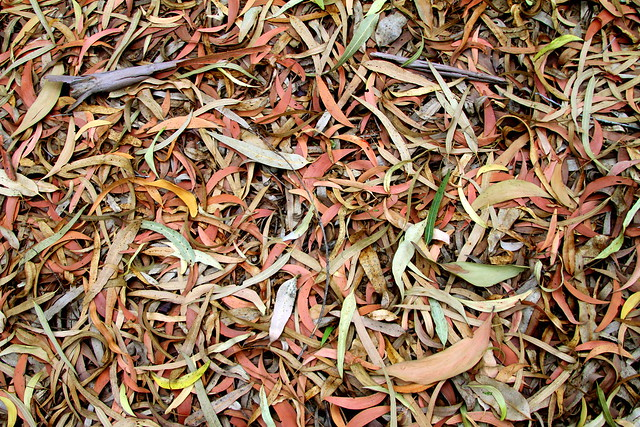 Colorful Dried Leaves