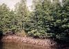 Neprostupné mangrovníkové břehy, foto: Petr Nejedlý